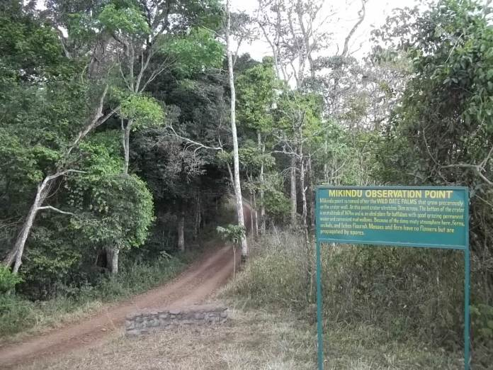 Forest at Mikindu Observation point