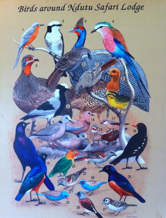 Ndutu.birds