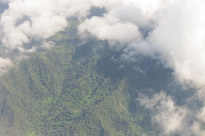 Monduli_forest