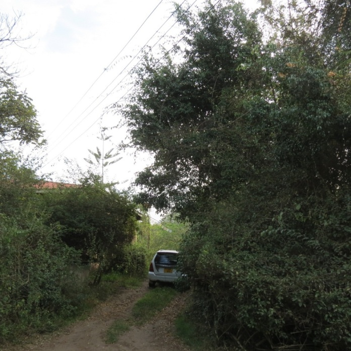 AfWoodOwl_ersatz-jungle