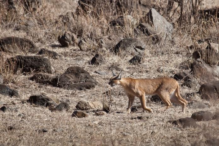Tz wildlife 13 2351 (Zul Bhatia)
